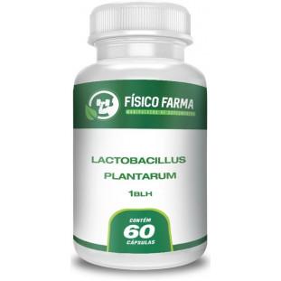 Lactobacillus Plantarum 1 bilhão ufc